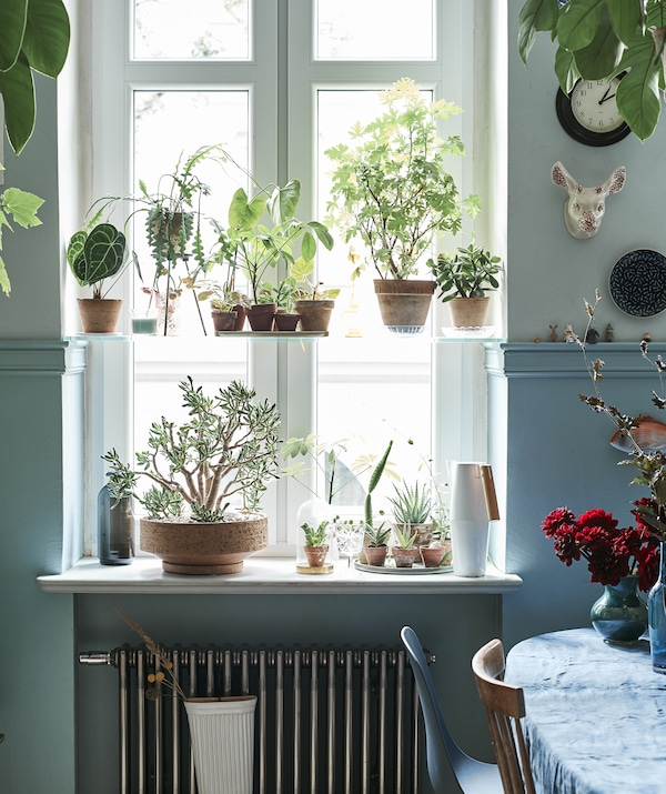 Picture of the kitchen window filled with green house plants.
