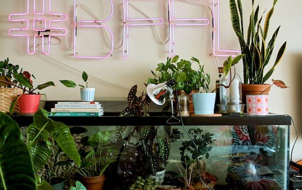 Pièce avec plantes posées dans un aquarium et enseigne lumineuse rose au mur.