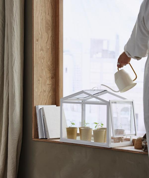 Pieni SOCKER-kasvihuone ikkunalaudalla. Nainen kastelee taimia VATTENKRASSE-kannulla.