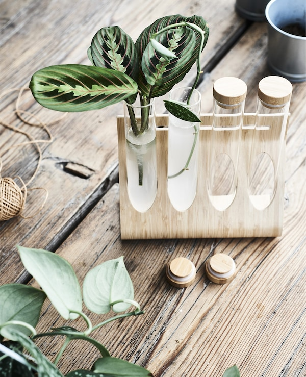 Plant stems in glass tubes in a bamboo holder.
