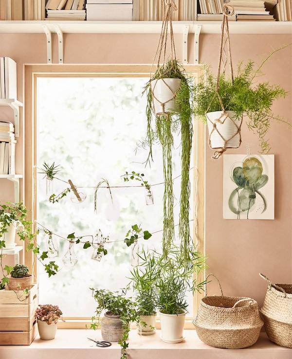 Plantas verdes de distintas formas y tamaños animan la ventana de este salón.