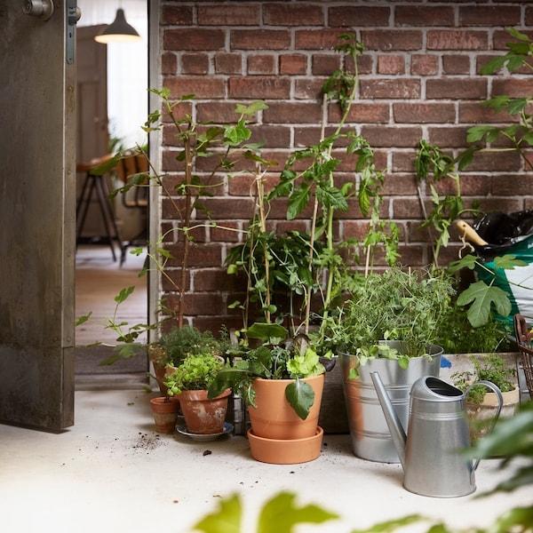 Plantas y semillas en maceteros IKEA SOCKER