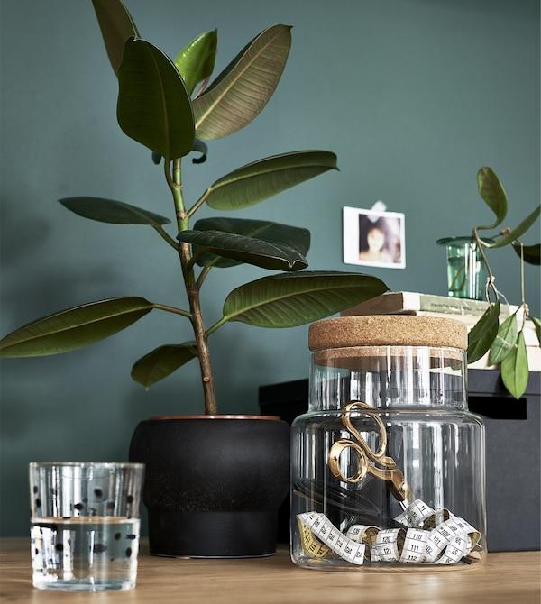 Plantas y tarro de cristal frente a una pared verde.