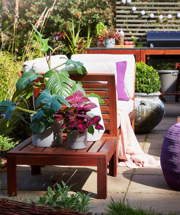 Plante de diferite dimensiuni și culori așezate pe o terasă, cu mobilier de exterior și o grădină în spate.