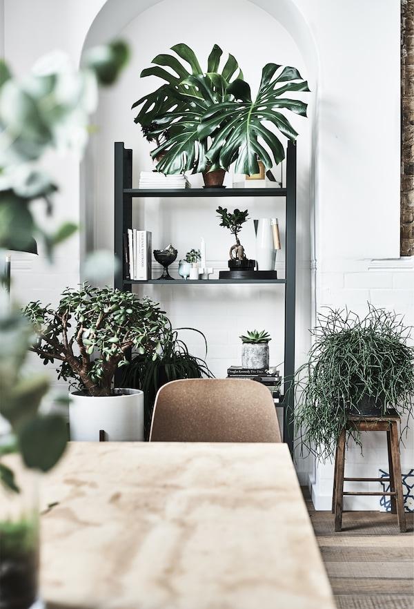 Plante expuse într-un alcov.