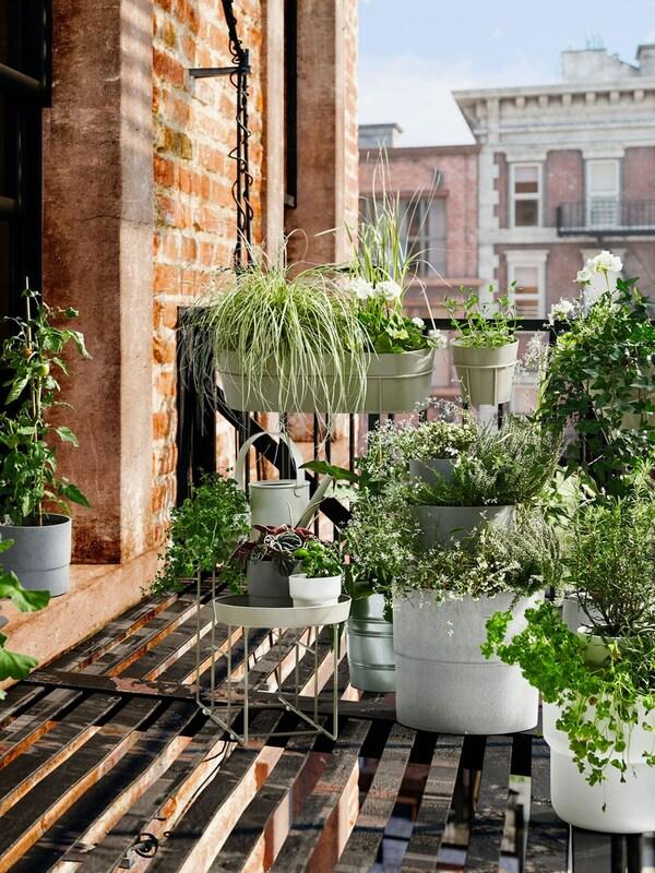 Planten & potten voor buiten