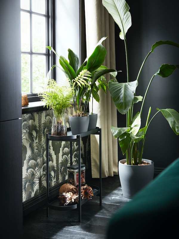 Planter.