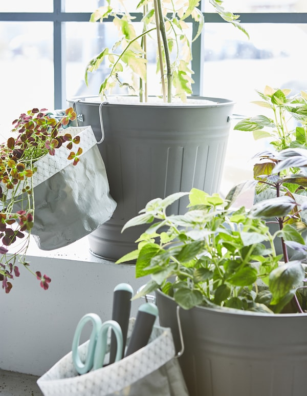 Planter i planteposer er placeret i KNODD spande for at lave en indendørs have.