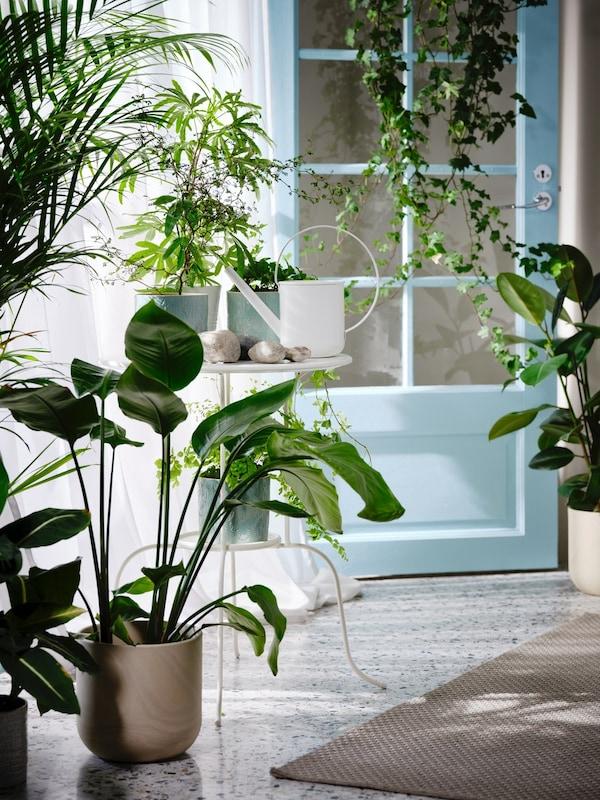 Plantes & pots