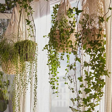 plantes-fleurs-tombantes