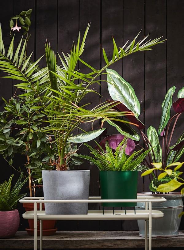 Plantes posées sur un support KRYDDPEPPAR beige
