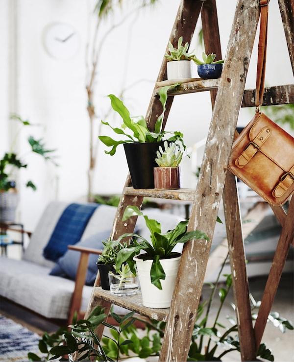 Plantes présentées sur un vieil escabeau en bois.