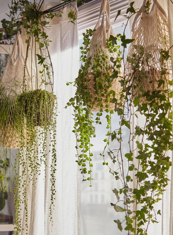 Plantes suspendues à une fenêtre dans un sac en filet