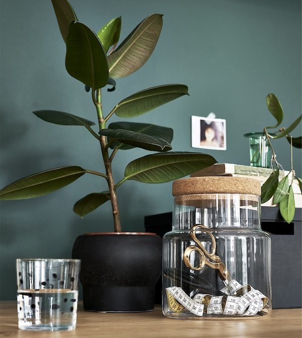 Plants and a glass jar against a green wall.
