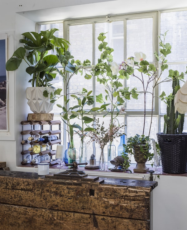 Plants and cuttings on the sill of a large window.