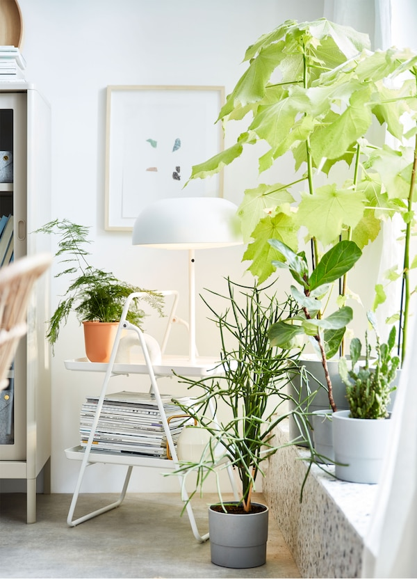 Plants and pots arranged around a window sill, with an IKEA VIGGJA foldable white tray stand used to hold plants and magazines.