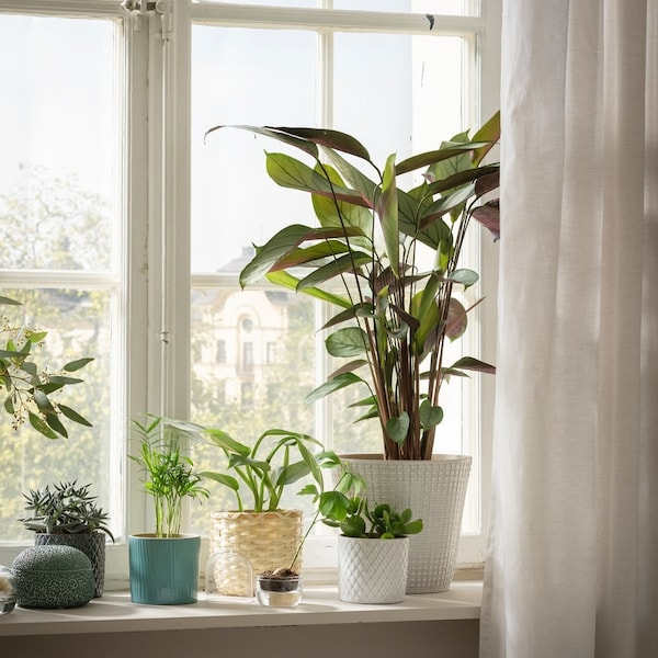 Plants are standing on a window sill.