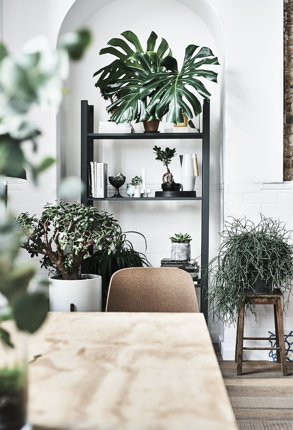Plants displayed in an alcove on an open shelving unit.