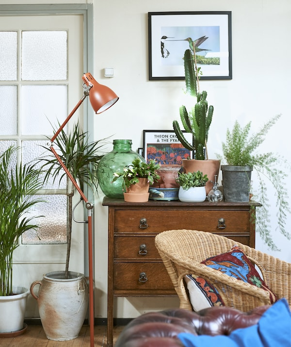 Plants displayed on top of an old chest of drawers and a red floor lamp.