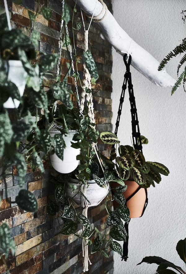 Plants hanging in macramé holders from a white branch.