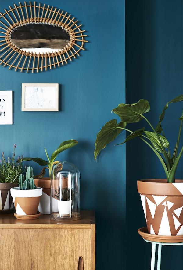 Plants in painted terracotta pots.