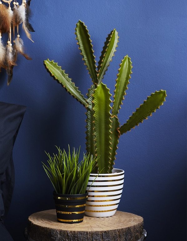 Plants in pots decorated with gold tape, against a blue wall.