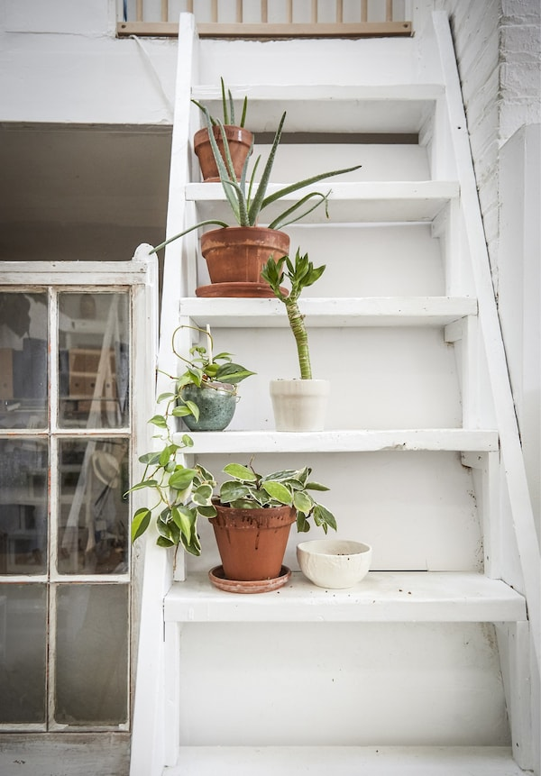 Plants line the staircase.