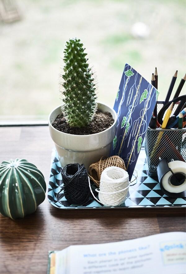Plateau contenant cactus et fournitures de bureau