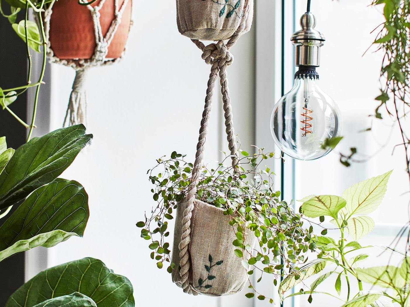 Plusieurs plantes devant une fenêtre, formant une petite jungle urbaine. L'une d'entre elles se trouve dans un cache-pot en jute avec des motifs brodés.