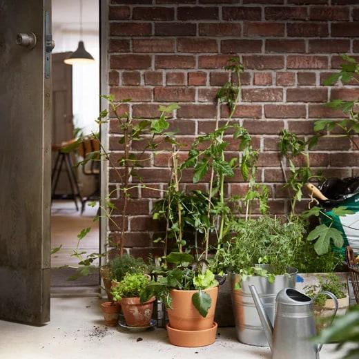 Plusieurs plantes en pot posées sur le sol, contre un mur de briques, à l'extérieur d'une maison. L'arrosoir se trouve à proximité des cache-pots SOCKER, qui accueillent des plantes.