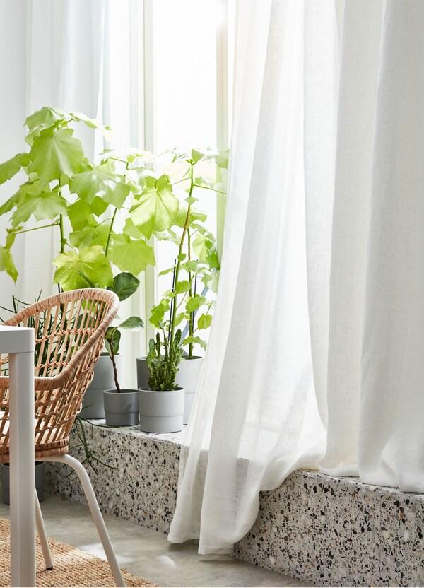 Półprzezroczyste białe zasłony IKEA LEJONGAP na oknie z roślinami i doniczkami stojącymi na parapecie.