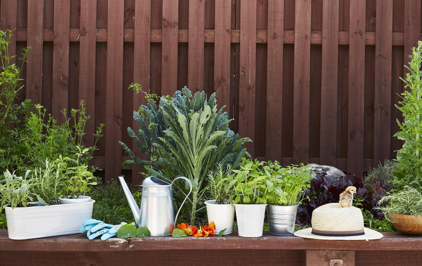Pots d'herbes alignés sur un banc de jardin