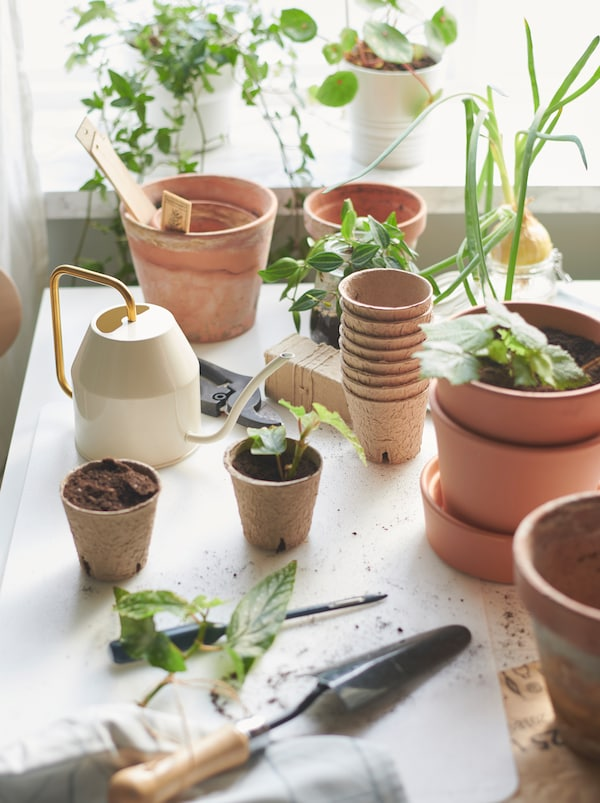 Pots in different sizes on a table in front of a window with plantlets and planting tools like VATTENKRASSE watering can.