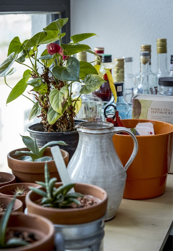 Potted plants and a jug on a windowsill.