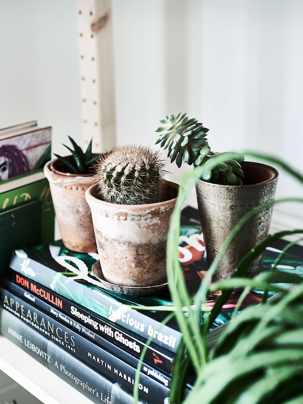 Potted plants displayed on top of books.