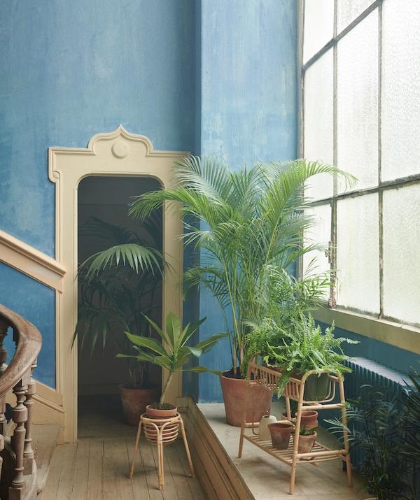 Priestranný interiér s veľkými oknami s veľkými rastlinami a menšími rastlinami na stojane na kvety BUSKBO.