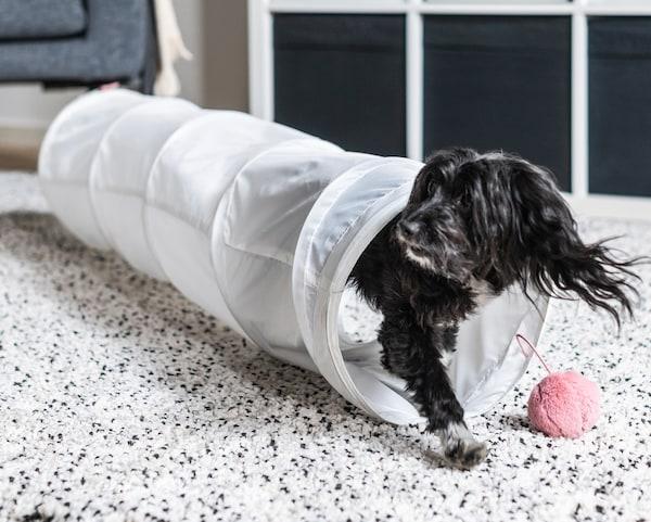 Prikaz malog crnog psa koji izlazi iz dugog tunela za igru s roza lopticom na kraju.
