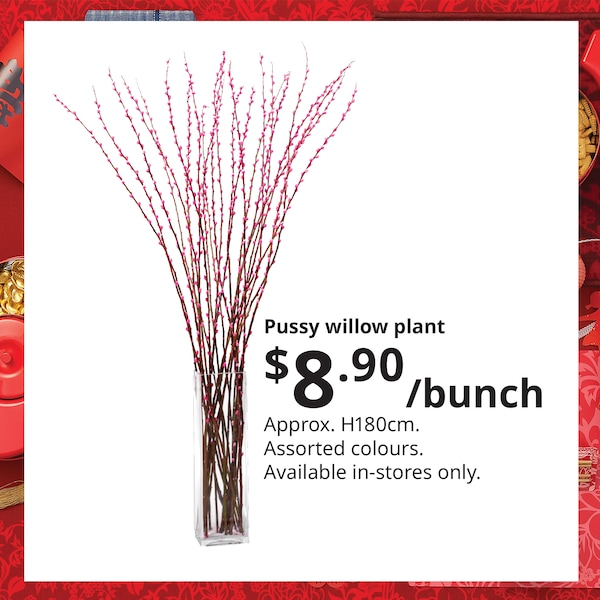 Pussy willow plant bunch, IKEA Home Furnishings Singapore