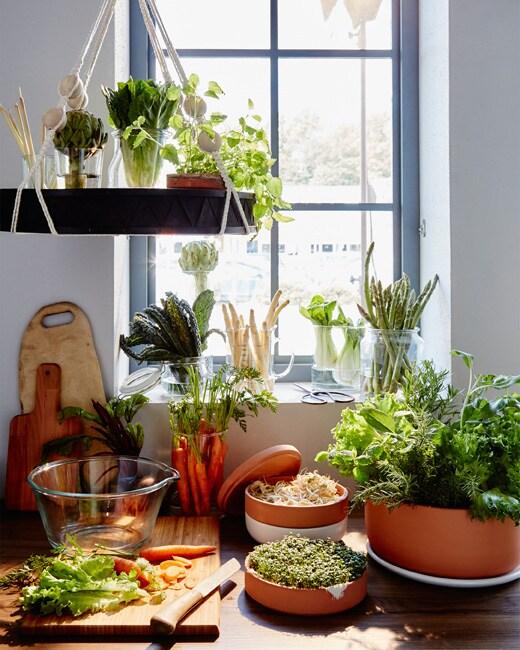 Quantité de légumes et d'herbes placés à la verticale dans des vases et des pots, près de la fenêtre et des carottes sur une planche à découper au premier plan.