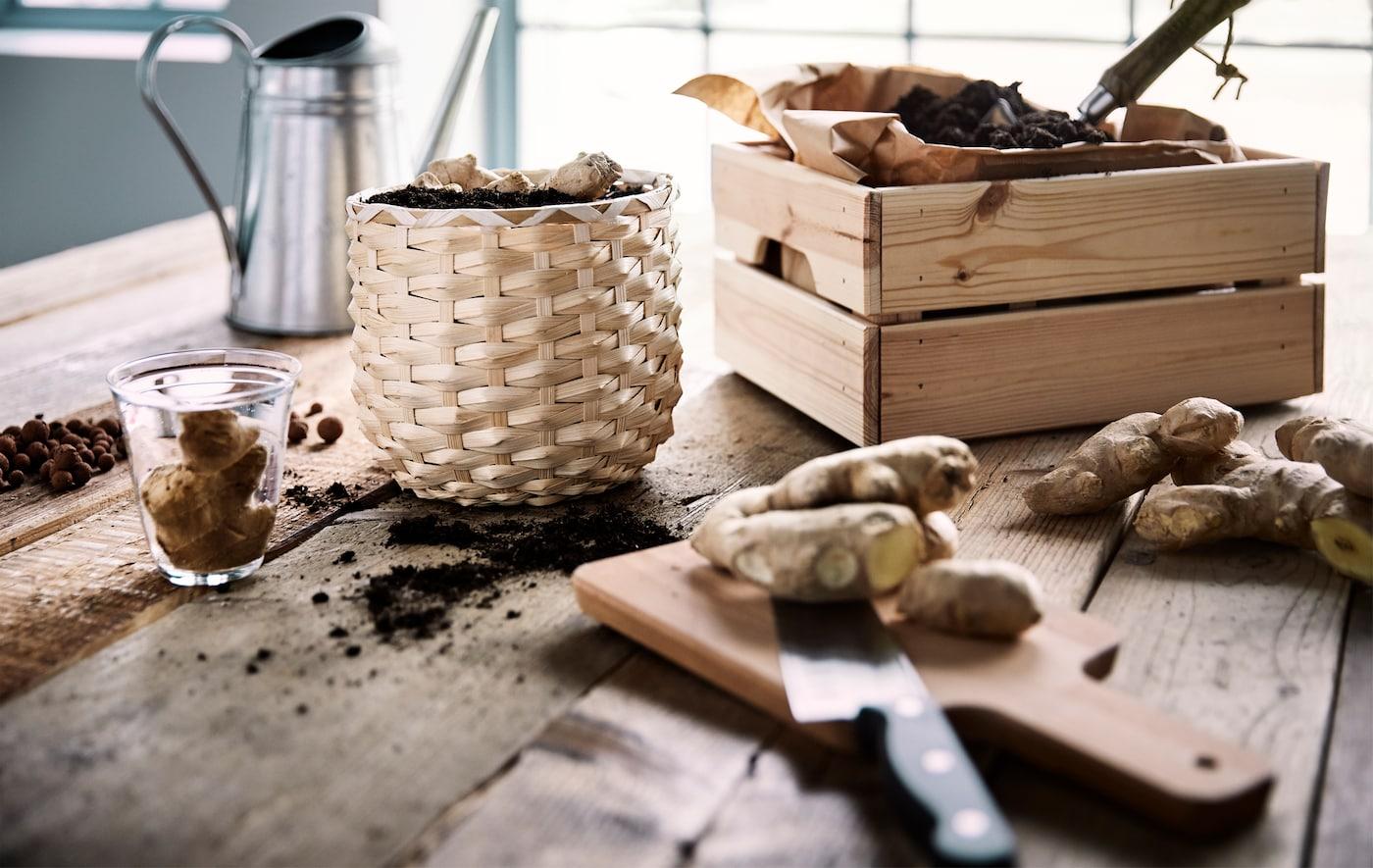 Rădăcini de ghimbir plantate într-un ghiveci de ratan lângă o cutie de lemn cu hârtie maro și pământ în interior, pe o masă de lemn.