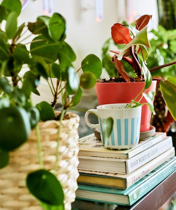 Растение в чайной чашке на стопке книг в окружении других растений в горшках.
