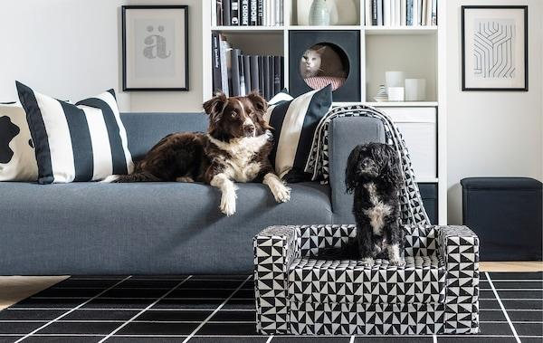 Ratgeber Home Office mit Hund