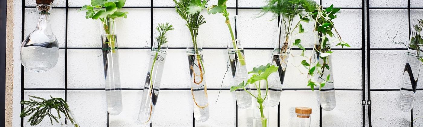 Reageerbuisjes met planten aan klimplantrek