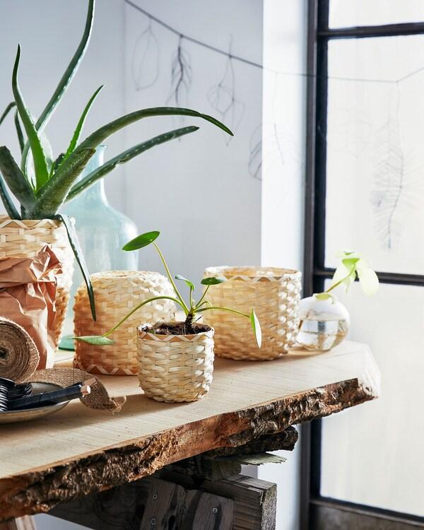 Realza las plantas con el bambú amarillo de los maceteros artesanales KAFFEBÖNA redondos, mostrados aquí en un banco para plantas.