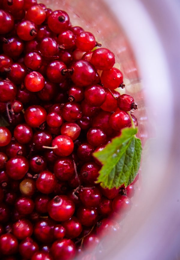 Red currants are perfect for a summer cordial.