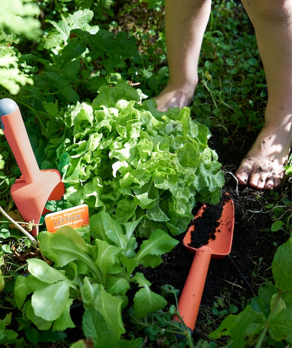 Red plastic gardening tools lying among plants in a garden herb patch.