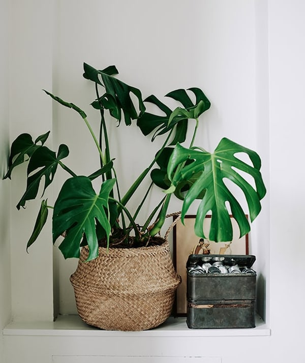 Rental house styling tips - FLADIS basket - IKEA inspiration