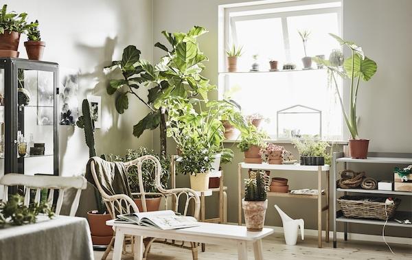 ركن في غرفة جلوس بيضاء مع الكثير من النباتات في آنية على حاملات نباتات.
