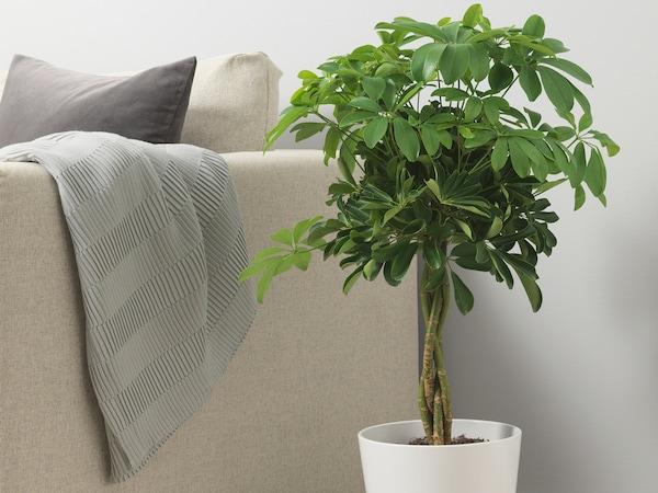 Roślina doniczkowa IKEA