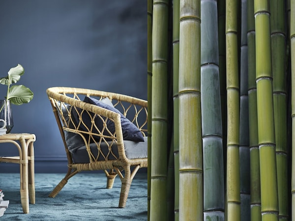 Rozdělená fotografie zobrazující bambusové stonky a hotové křeslo s rámem z tkaného bambusu.